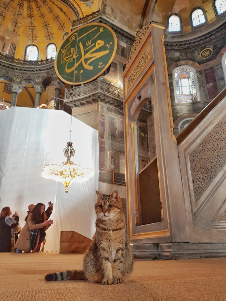 Istanbul hagia Sophia church mosque museum street stray cat cats travel tour